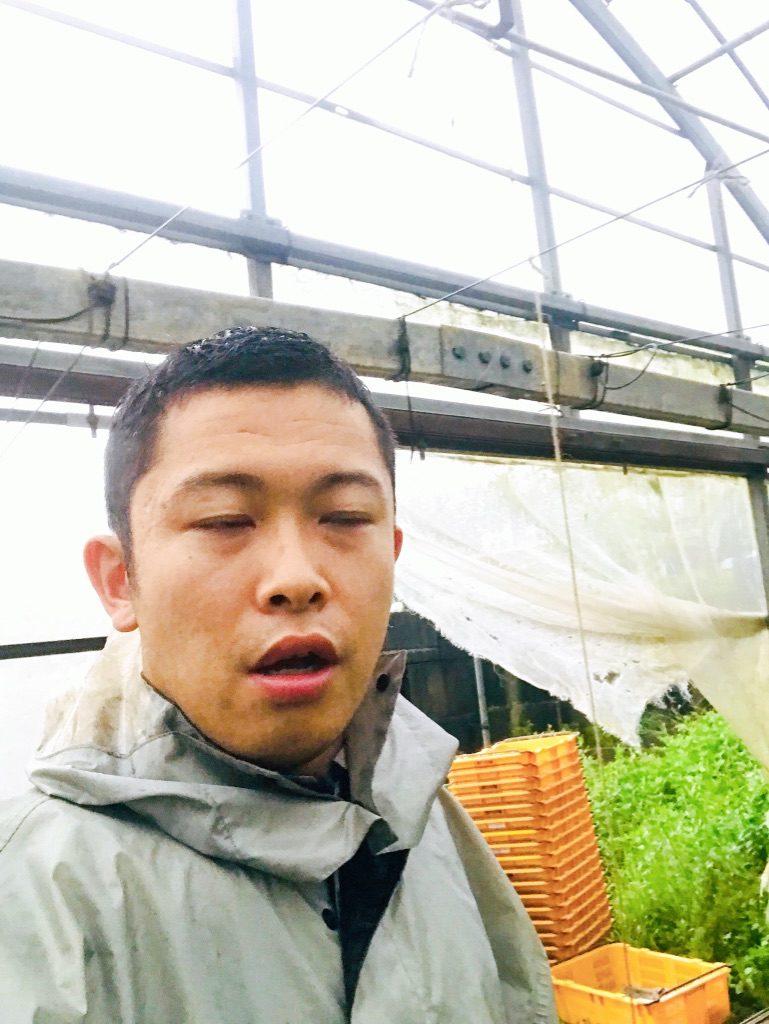サンヒルズ沖縄でのマンゴー収穫体験