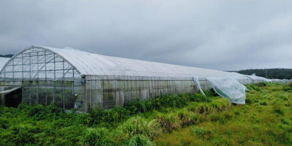 台風被害にあったビニールハウス