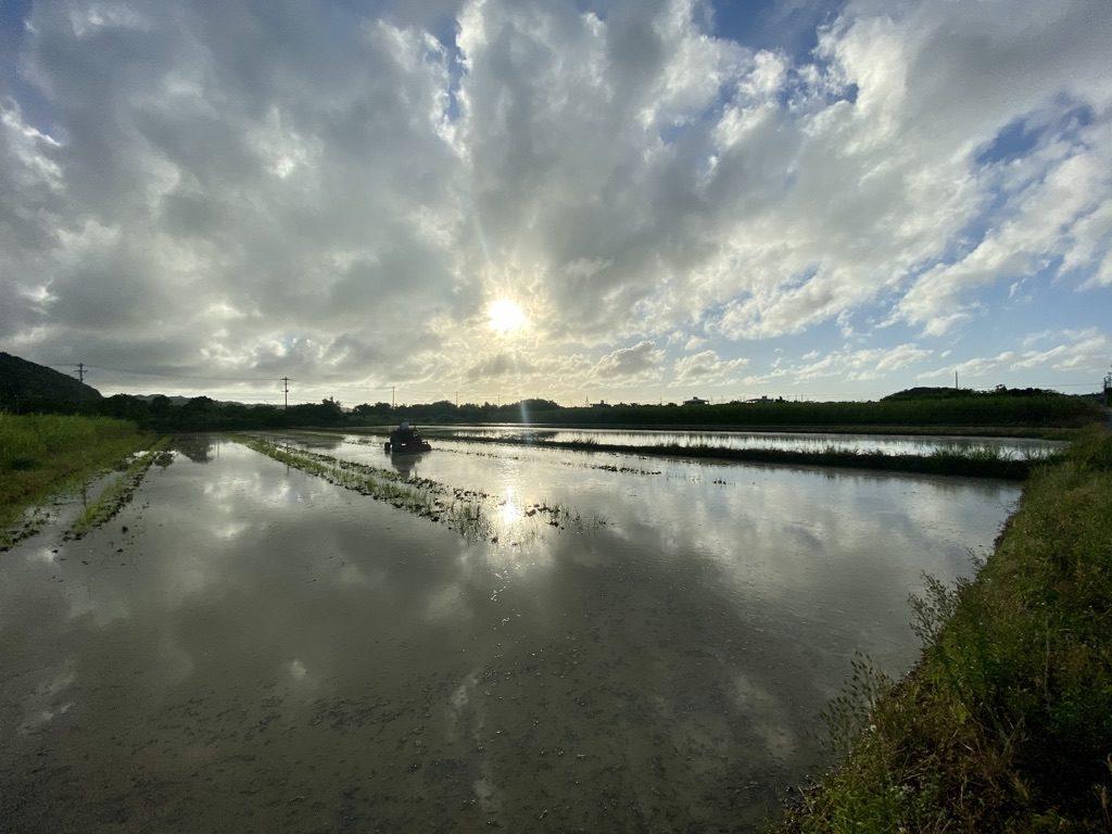 国頭村の畑と夕日