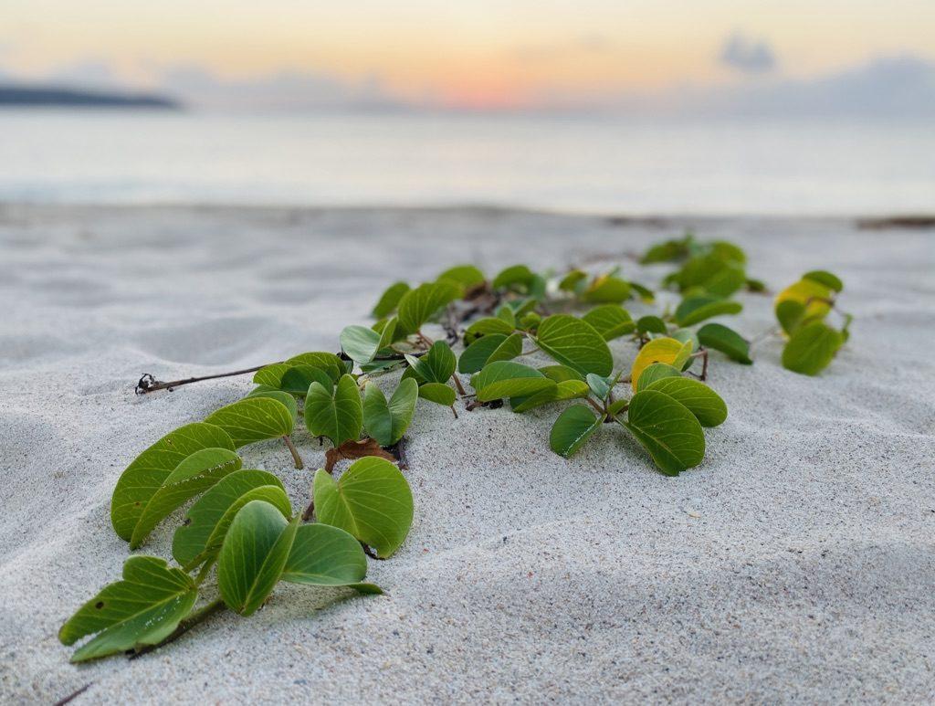国頭村のオクマビーチと夕日と緑
